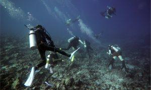 Especialidad de Buceo en corrientes drift-diver les courants