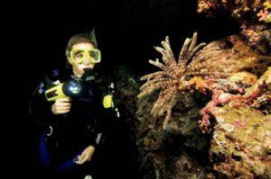 PADI Buceo nocturno Estepona Costa del Sol Malaga night diving plongee nuit